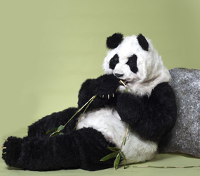 GIANT CHINESE PANDA PERFORMER - CHINESE NEW YEAR ACTS TO HIRE