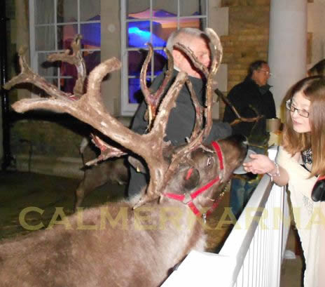 winter wonderland themed entertainment - LIVE REINDEERS TO HIRE - UK