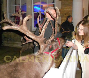 HIRE LIVE REINDEERS FOR YOUR XMAS EVENT UK