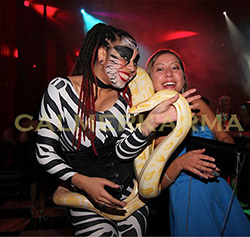CIRCUS THEMED ENTERTAINMENT -UNIQUE ZEBRA THEMED SNAKE ACT MIX AND MINGLE OR STAGED CIRCUS ACT - UK